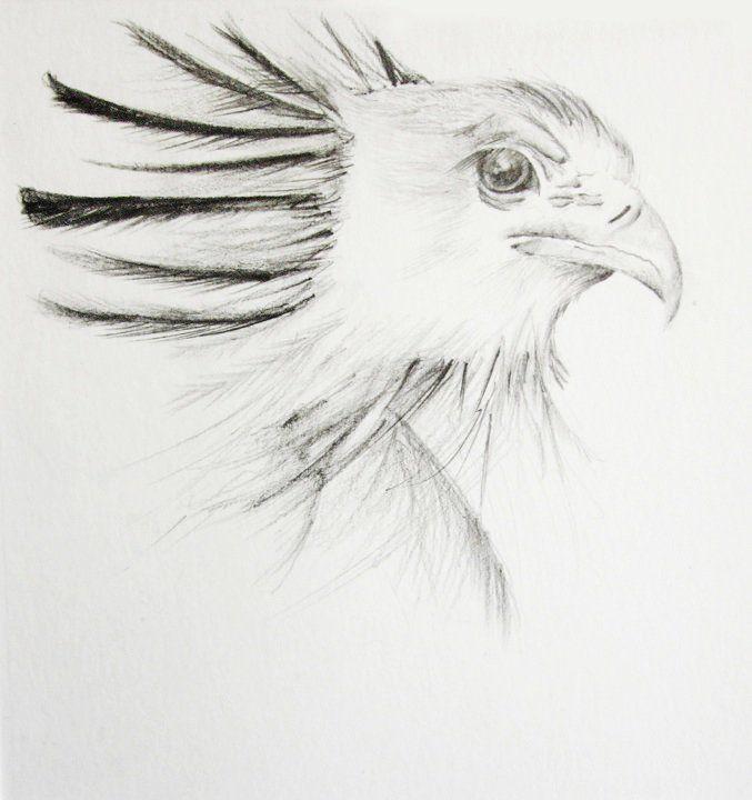 waarnemingstekenen vogel