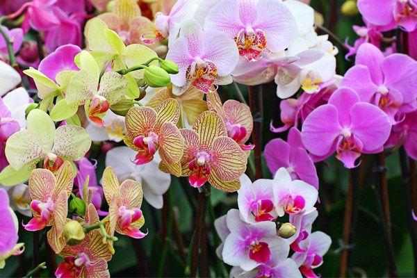 Ketahui Teknik Tanam Orkid and Cara Penjagaannya   http://www.wom.my/ada-apa/teknik-tanam-orkid/