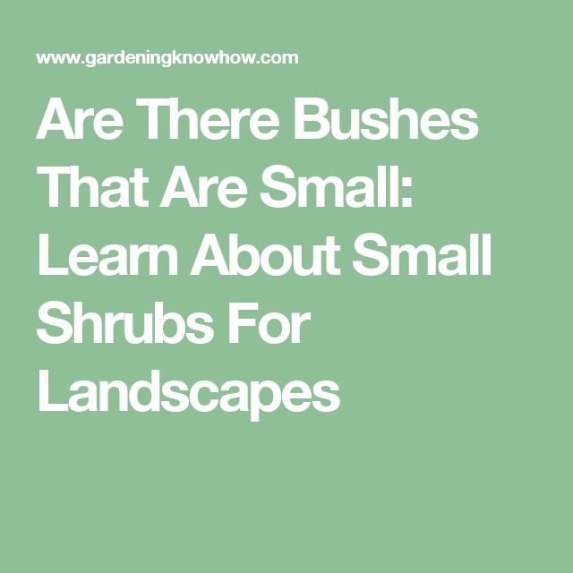 Are There Bushes That Are Small: Learn About Small Shrubs For Landscapes