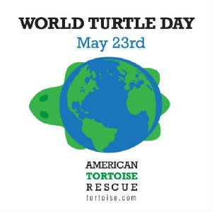 TurtleZone News: World Turtle Day - May 23rd  Fan of this because I will have a class pet that's a turtle