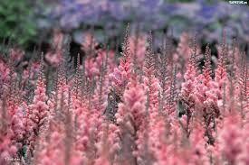 Znalezione obrazy dla zapytania różowe kwiaty
