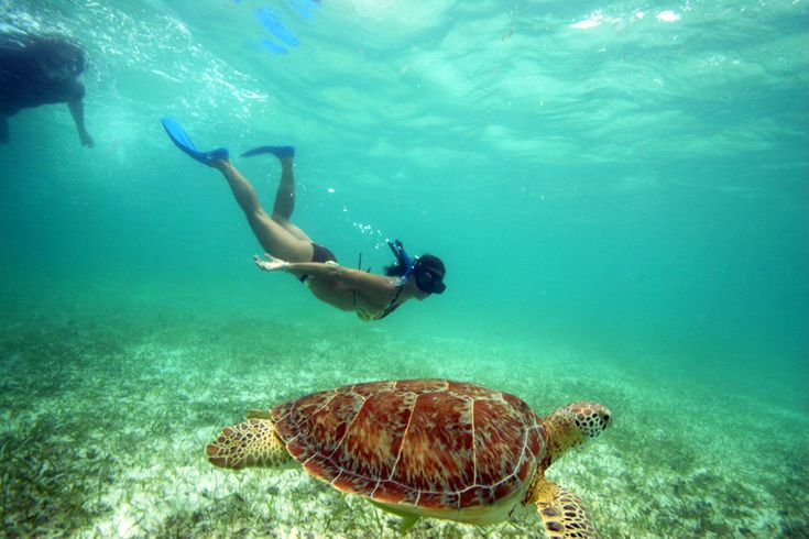 Snorkeling with Sea Turtles in Akumal, Mexico