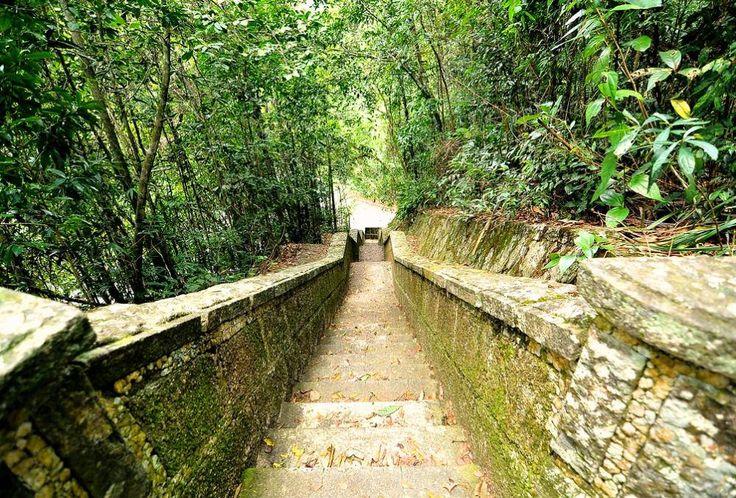 Tijuca National Park | A journey through Rio de Janeiro