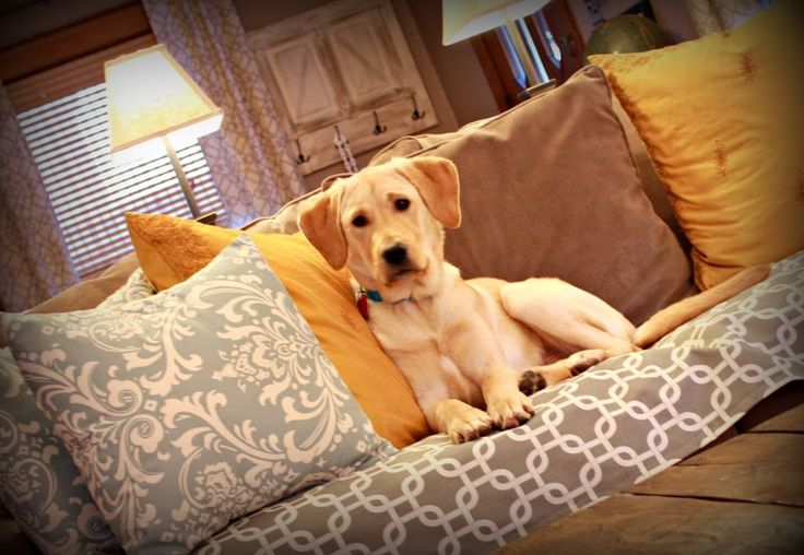 DIY Puppy Couch Cover by RobbRestyle.com