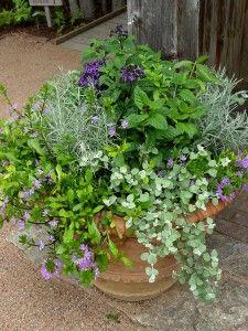 Ghiveci cu plante aromatice