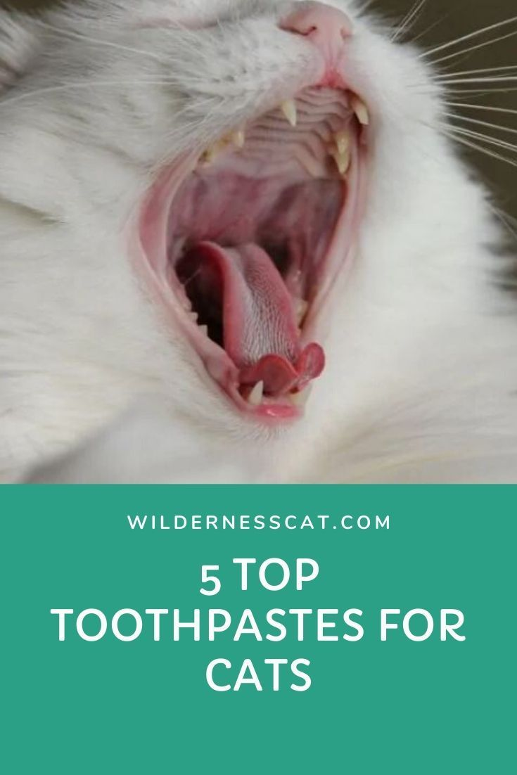 Best Cat Toothpaste Of 2019 Keep Your Cat S Mouth Healthy In 2020 Mouth Healthy Cool Cats Toothpaste