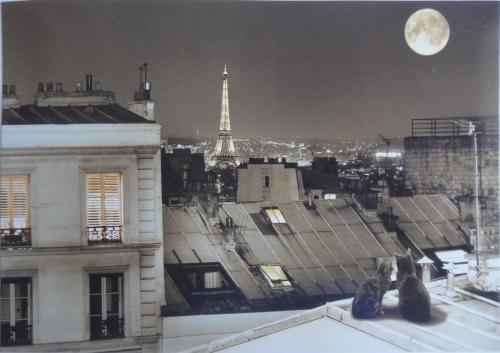 So beautifulSoft Kitty, Tours Eiffel, Eiffel De, St Eleuthèr, Rue St, Paris, Cat In Paris, La Rue, La Tours