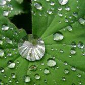 Die Reise eines Regentropfens als Bewegungsgeschichte