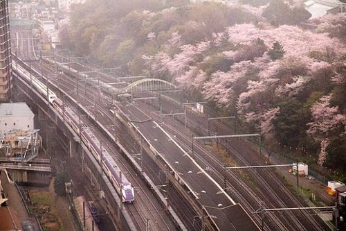 Cherry blossom and Shinkansen 桜と新幹線 cherryblossom shinkansen 新幹線 山形新幹線 bullettrain jreast jr東日本 つばさ やまびこ