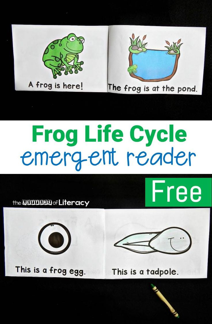 This free life cycle of a frog emergent reader is perfect to add to your collection when you are learning about life cycles with your early readers!