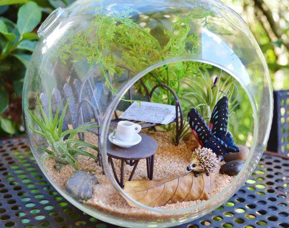 25 best ideas about terrarium kits on pinterest indoor for Indoor plant gift ideas
