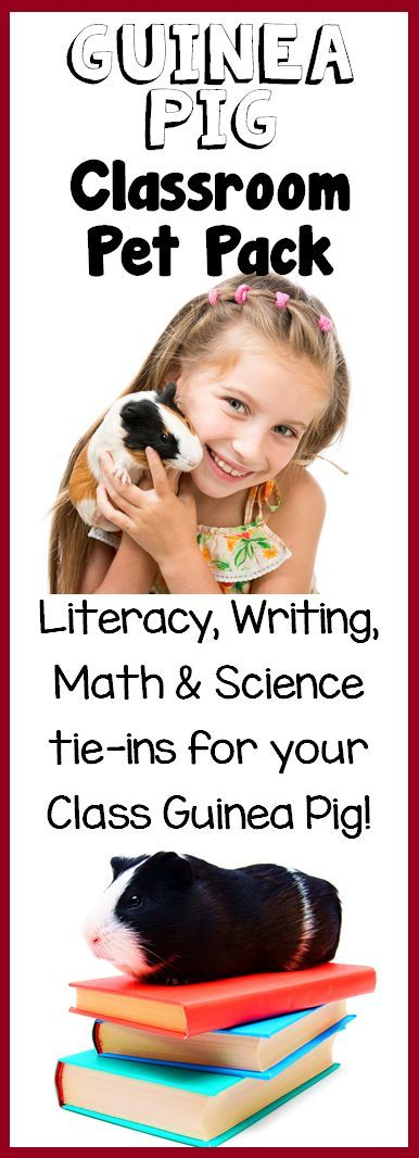 Guinea Pig Classroom Pet Pack: Have guinea pigs in your classroom? Maximize the learning potential of your pet center with this pack full of literacy, math and science activities!