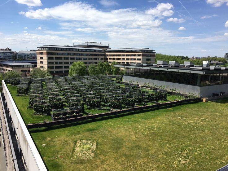 Vue de la ferme urbaine Peas&Love sur le toit de Caméléon à Bruxelles.