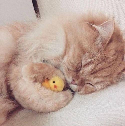 Adorable! New video on YouTube  #kittens_of_world and...