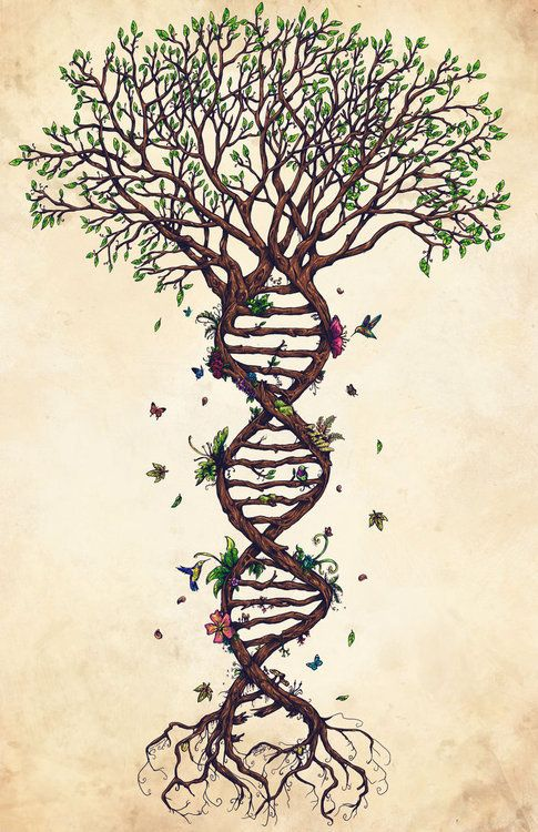 • love tree life green tattoo flower flowers study nature peace passion science leaves evolution environment biology organic butterflies DNA roots tree of life lightworker veggie carbon footprint tree drawing dna evolution givemeareasonto-love •
