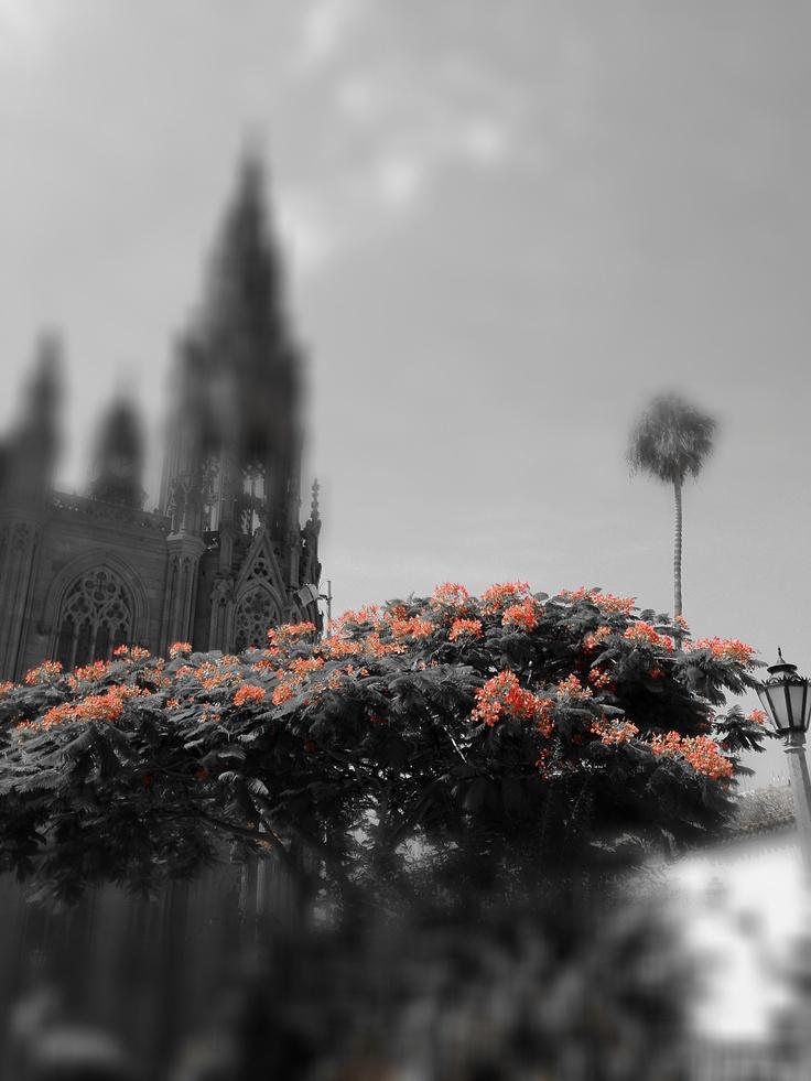 Arucas, piedra y flor