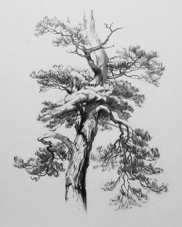 мире дерево рисунок графика августе прошлого