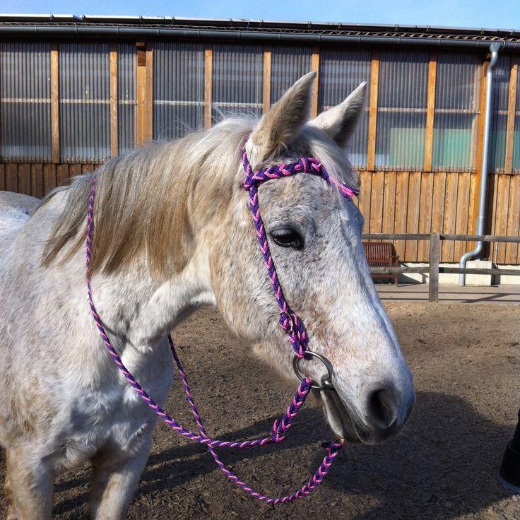 Warum nicht mal Pink? Schwarz und braun ist langweilig. Schmücke dein Pferd mit schönen farbigen Zügeln. Neidische Blicke sind da Programm!