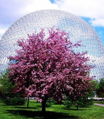 Montreal tourist home page
