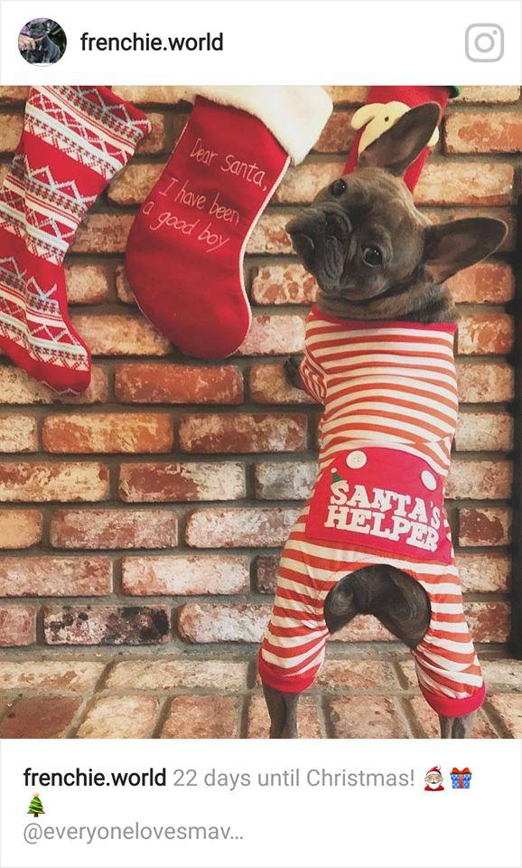 """Dear Santa, I have been a Very Good Boy"", signed Santa's Little Helper, aka a French Bulldog in a Christmas Candy Cane Striped Onesie ; )"