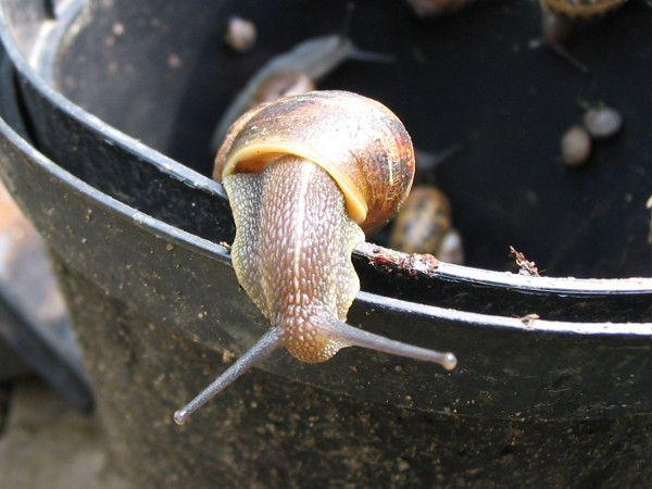 Die besten 25+ Was hilft gegen läuse Ideen auf Pinterest Mittel - was hilft gegen ameisen in der küche