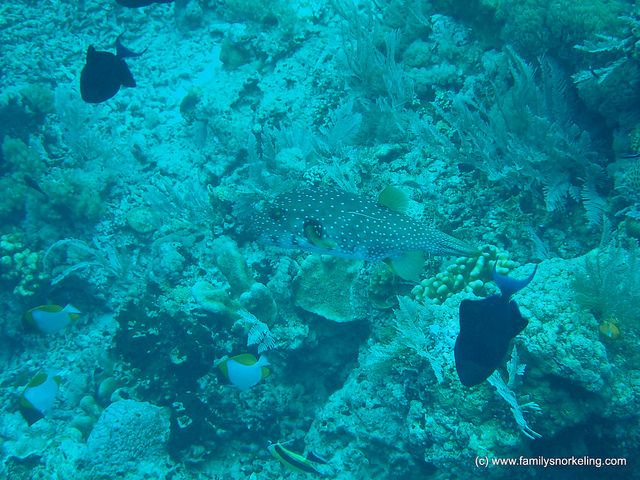 Great Family Snorkeling Vacations In Bunaken Island