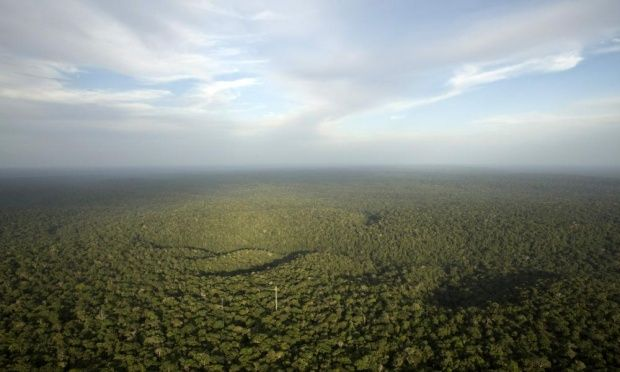 Rate of environmental degradation puts life on Earth at risk, say scientists