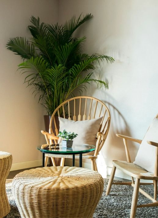 Most Palm Trees Don T Make Good Houseplants But The Parlor Is One