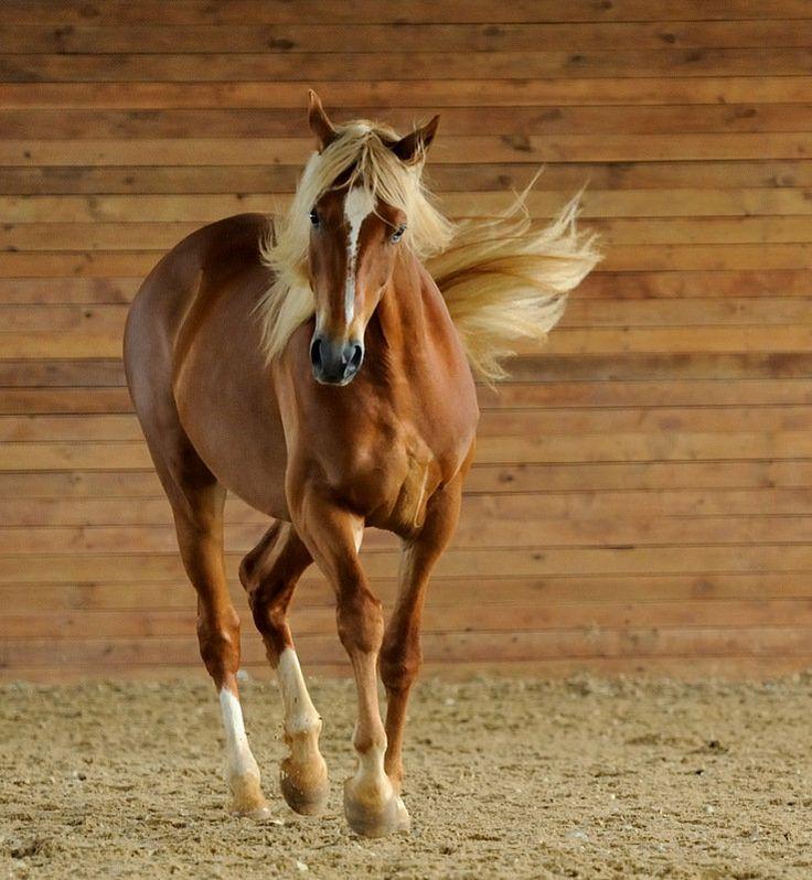 Flaxen Chestnut Horse - photo#39