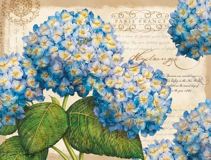 Blue Floral Deluxe Note Cards , 2080502 | Lang