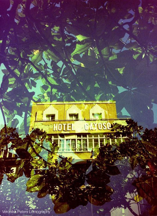 Veronika Peters  Lomography http://lichtpunktundstrich.tumblr.com