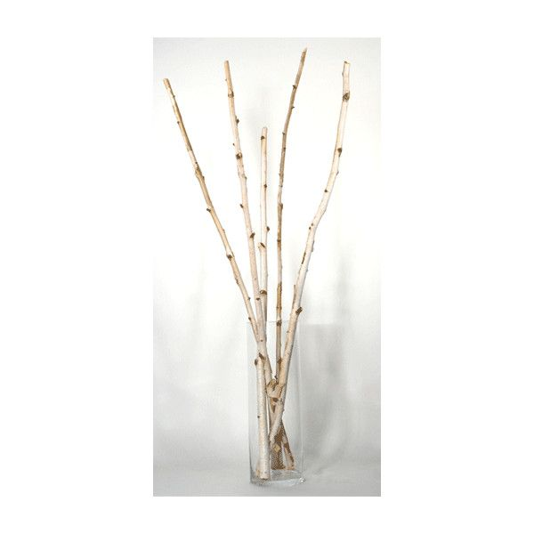 Decorative Branches Birch Branches Himalayan Birch