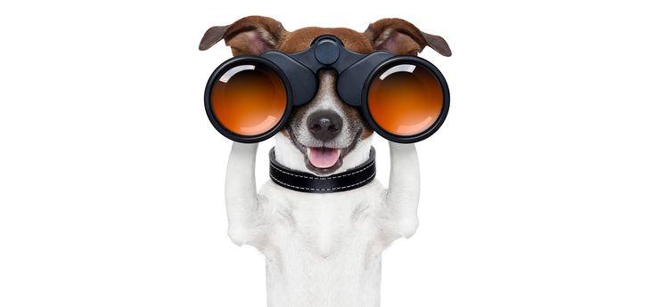 Compare Pet Insurance