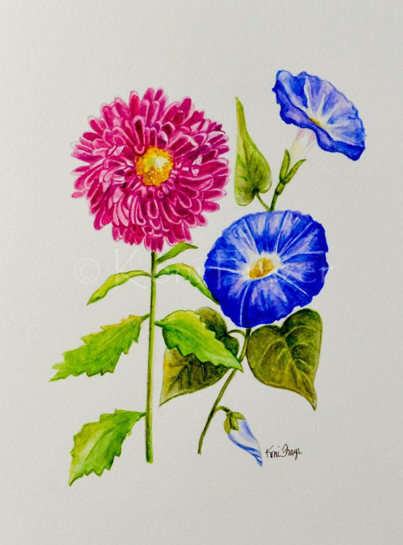 Aster and Morning Glory September birthday flower by KoniFrazer