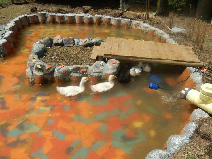 17 best images about jardineria estanque para patos y for Modelos de estanques