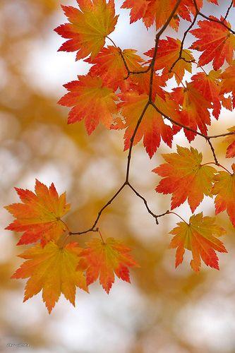 Rote Spitzen etzücken am Baum die Wanderer im Herbst.