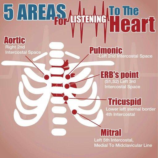 Assessing heart sounds Modern medicine