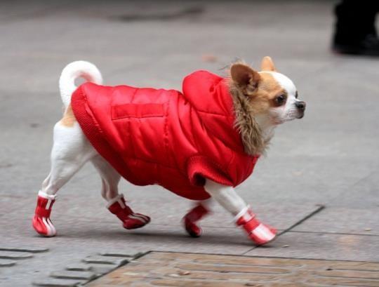 Купить зимнюю обувь для собак