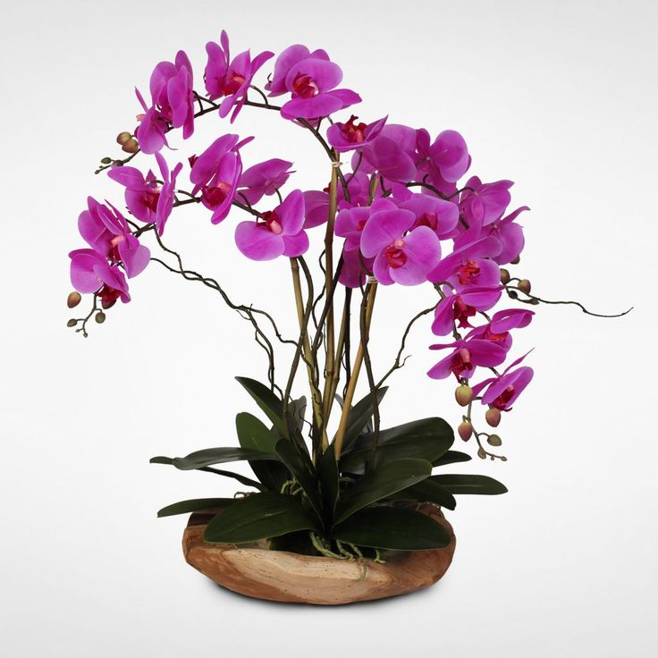 real touch silk orchid with curly willow and succulents in natural teak brown - Silk Orchids