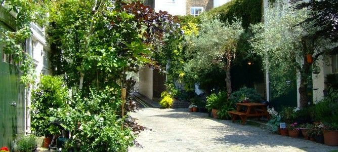 London mews' olive grove oasis | The City Planter