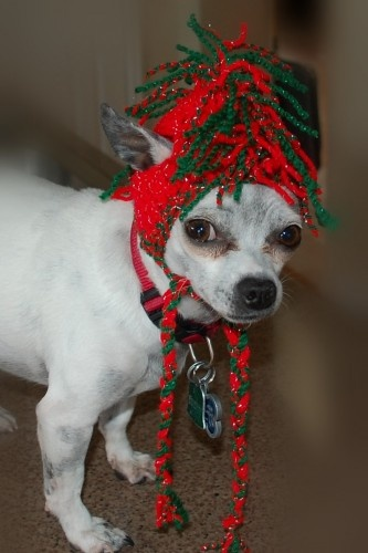 Jingle Bell Rock Mohawk Dog Hat - Size Small: Christmas Crafts, Rock Mohawk, Mohawk Dog, Jingle Bells, Hat Patterns, Crochet Patterns, Crochet Dog Hat