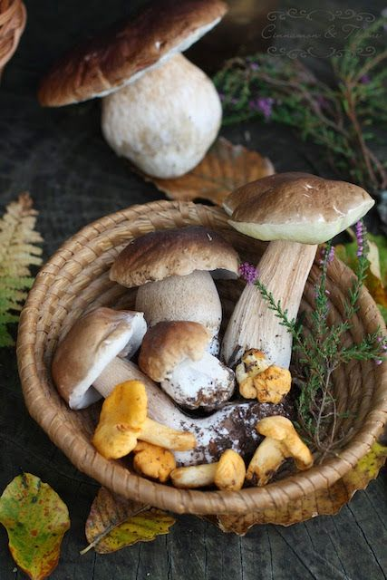 foraged mushrooms food photography...