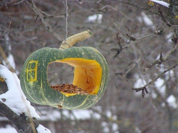 Кормушка для птиц из тыквы своими руками