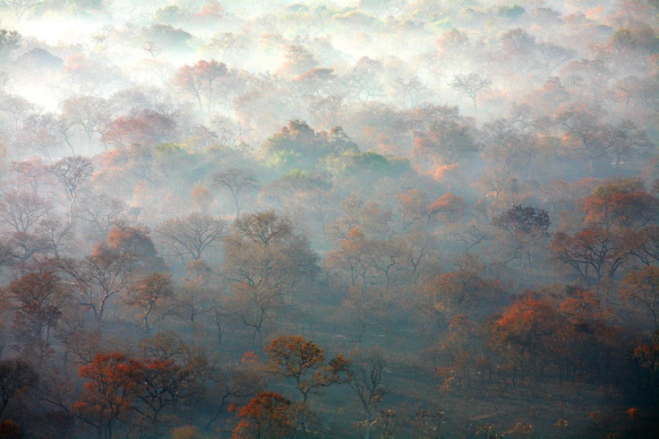 Misty forest in Gorongosa National Park. Photo by Paul Kerrison.