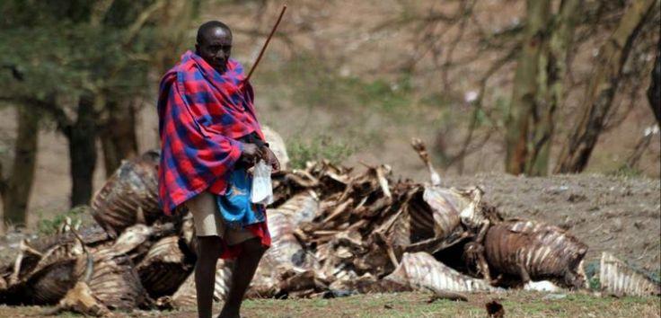 Cerca de un millón de niños sufre malnutrición por culpa de la sequía en África - http://www.renovablesverdes.com/cerca-de-un-millon-de-ninos-sufre-malnutricion-por-culpa-de-la-sequia-en-africa/