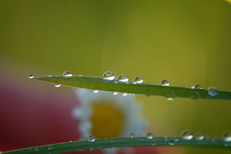 Drops in summer
