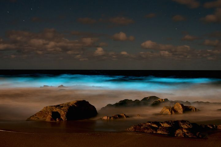"""Spectacular Bioluminescent """"Sea Sparkles"""" Glow at Brava Beach in Uruguay. Photograph by Remco Douma - The sparkles that Douma photographed were caused by a dinoflagellate species called Alexandrium fraterculus. It's nontoxic, and scientists aren't exactly sure why it shines. Some think that the Alexandrium fraterculus uses it as a defense mechanism. The crashing waves could've disturbed it and caused this light."""
