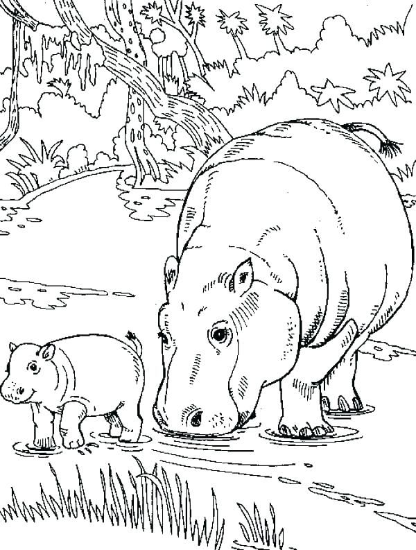 Drawing For Kids Bedroom In 2020 Baby Coloring Pages Coloring Pages Cute Hippo