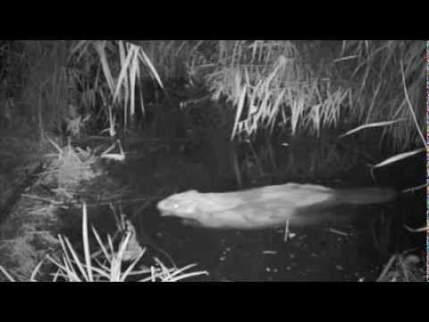 follow the Beaver, the raincoats - De regenpakken van de bevers - YouTube