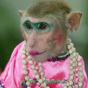 pictures of monkeys | Funny Monkey Pictures #1